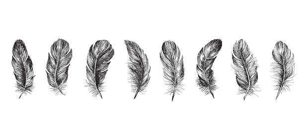 Feather icon set. Hand drawn illustration. Doodle sketch.