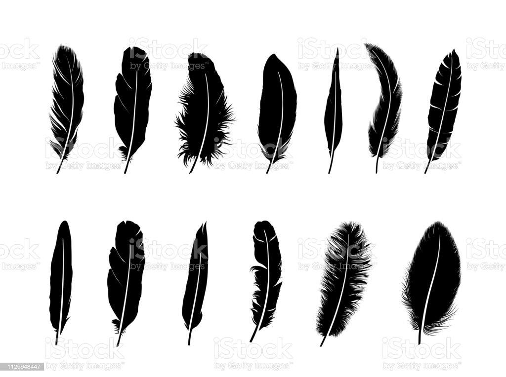 Feather set.  Different  birds feathers silhouette icons over white background - Grafika wektorowa royalty-free (Abstrakcja)