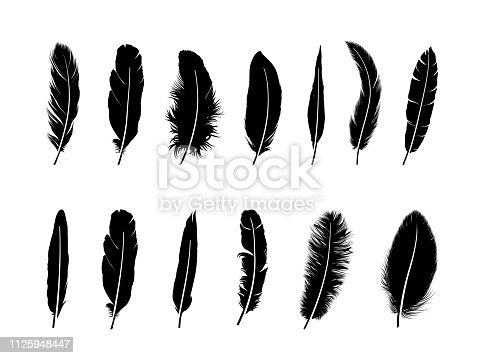 Feather set. Drawn illustration of different  birds feathers isolated over white background