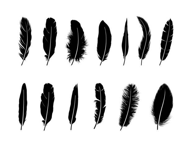 zestaw piór.  różne ptaki pióry ikony sylwetki na białym tle - pióro przyrząd do pisania stock illustrations