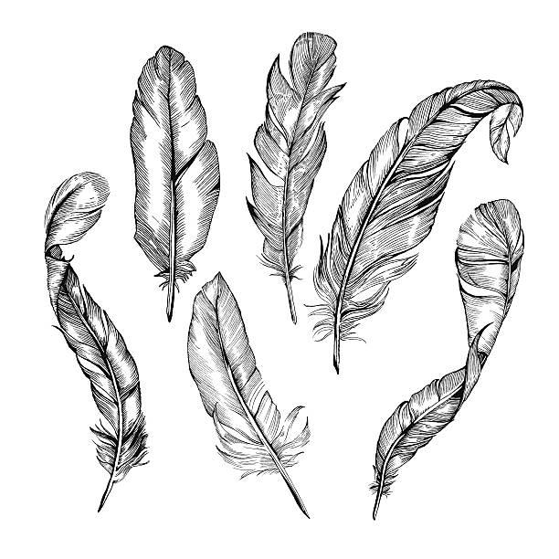 feather zestaw - pióro przyrząd do pisania stock illustrations