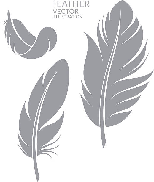 Feather. Set (EPS) + ZIP - alternate file (CDR)  feather stock illustrations