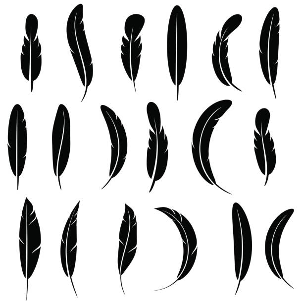 Feather Silhouette Collection Isolated vector art illustration