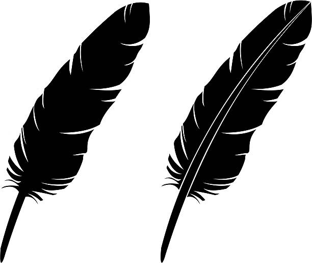 Feather Silhouette (vector)  bristle animal part stock illustrations