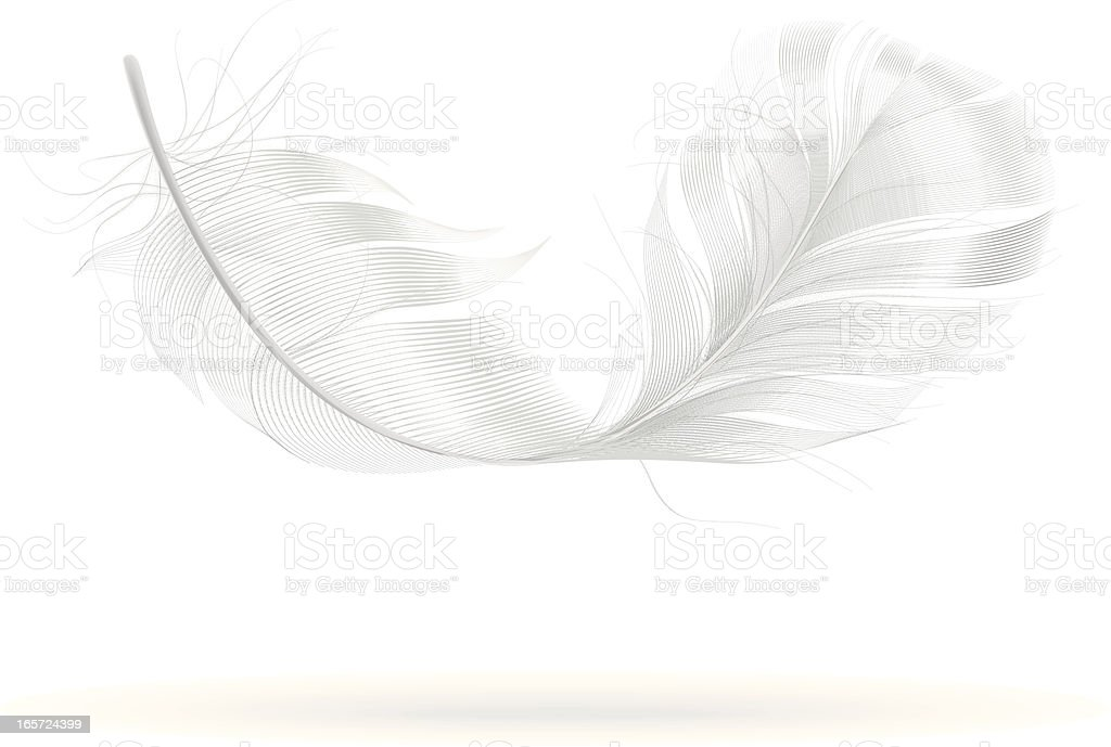 Feather vector art illustration