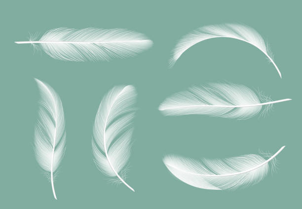 Feathers collection. Flying furry of goose vector realistic pictures isolated on transparent background Feathers collection. Flying furry of goose vector realistic pictures isolated on transparent background. Feather of bird, quill or plume illustration water bird stock illustrations