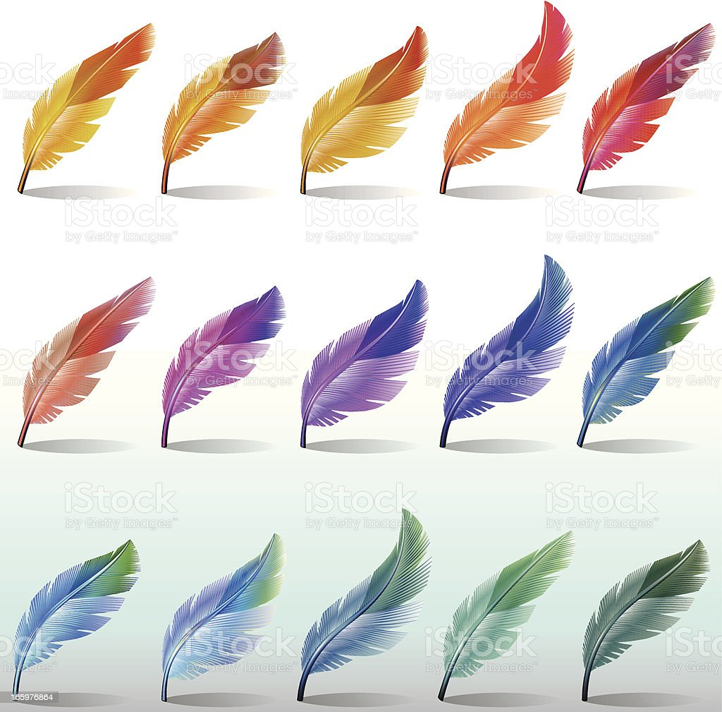Feathers Colour vector art illustration