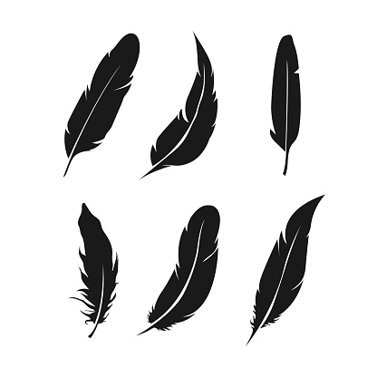 Feathers icon set. Bird feather vector collection.