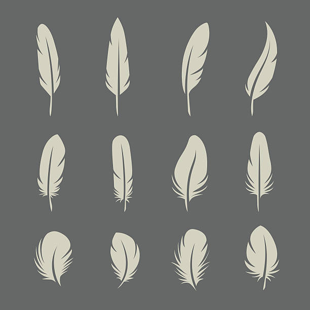 Feathers retro set Feathers set on dark background in vector feather stock illustrations