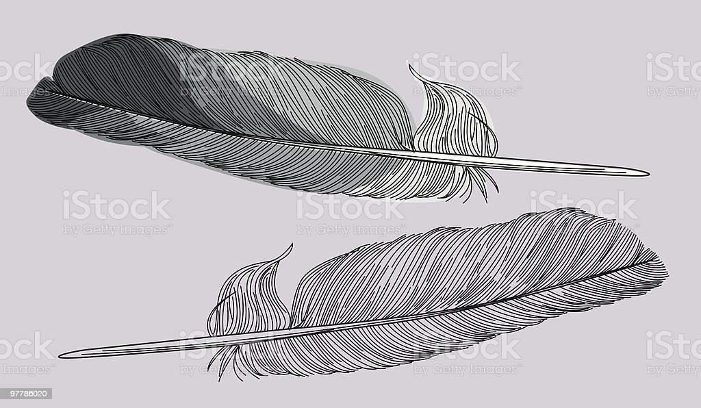 Feathers - Two Styles royalty-free feathers two styles stock vector art & more images of close-up