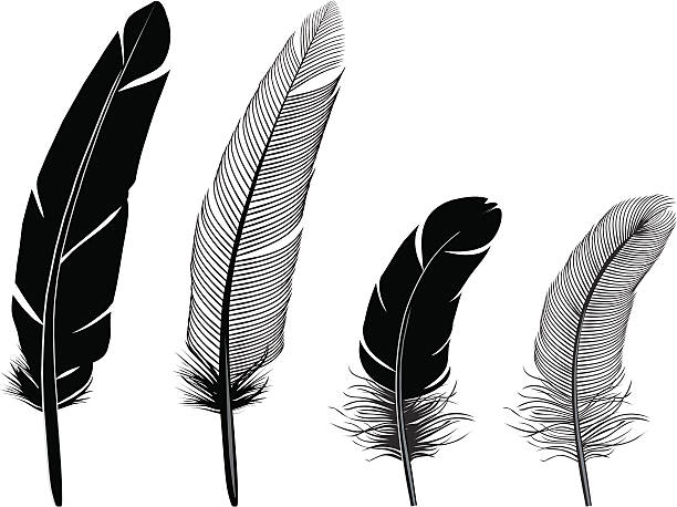 Royalty Free Feather Clip Art, Vector Images ...
