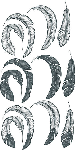 Feathers Feathers bristle animal part stock illustrations