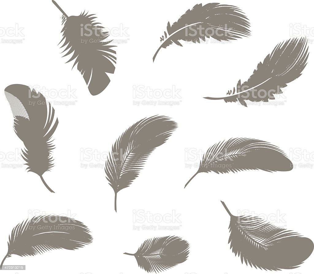 Feathers vector art illustration