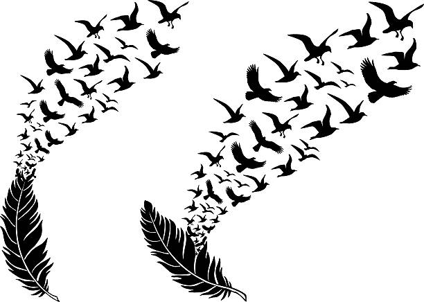 feathers with flying birds, vector feathers with free flying birds, vector illustration for a wall tattoo bird silhouettes stock illustrations