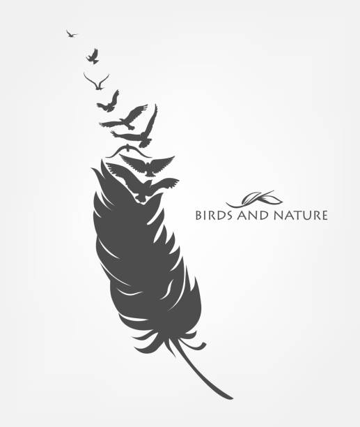 feathers with flying flock of fly birds feathers with flying flock of fly birds bird designs stock illustrations