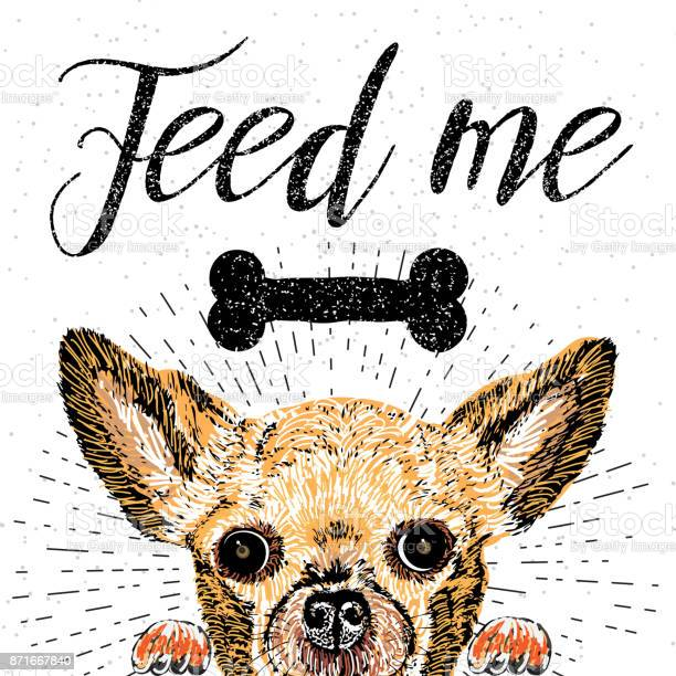 Feed me vector illustration with hand drawn lettering and cat on vector id871667840?b=1&k=6&m=871667840&s=612x612&h=h yorgsv6x2m46mwhxcilg7gldpm9arwopq47xkrypw=