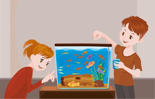 Feeding fish in fish tank