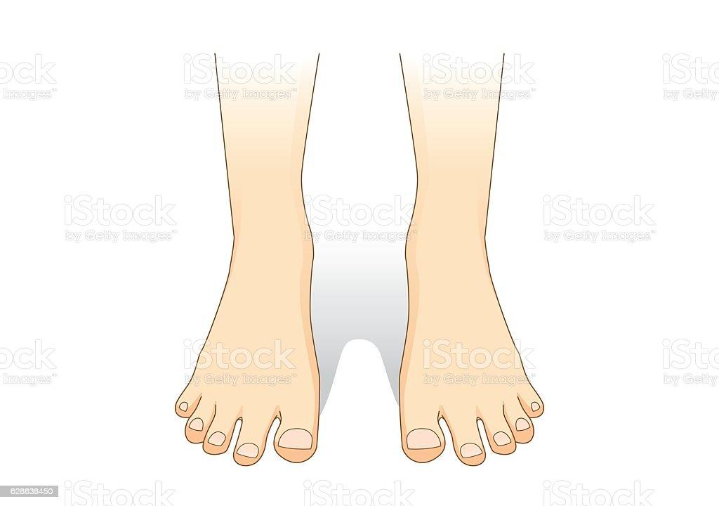 Feet vector in front view. vector art illustration