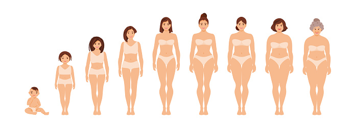 Female anatomy of different ages vector