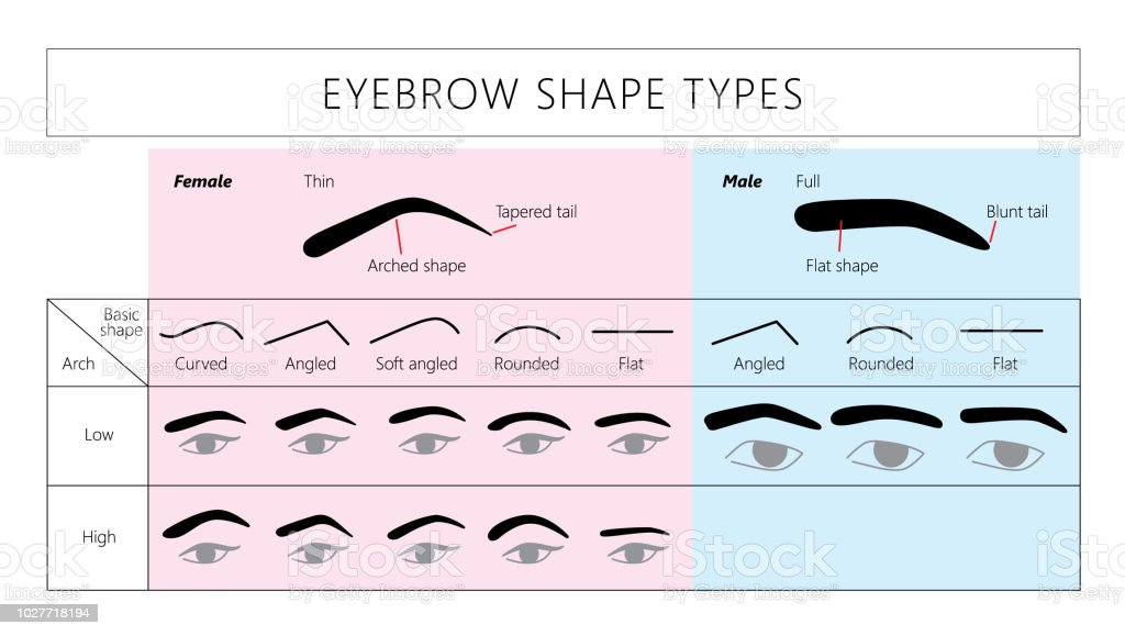 Thick Eyebrows Illustrations  Royalty