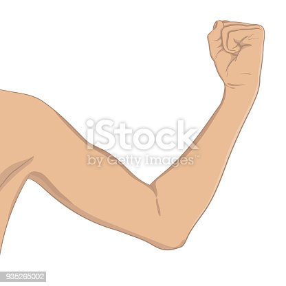 Female biceps, well toned. Elbow-bent arm showing progress after fitness. Vector illustration, colored, realistic style. Woman sport infographic concept.
