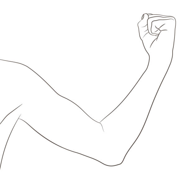 Female biceps, well toned. Elbow-bent arm showing progress after fitness. Vector illustration, black and white contour. Woman sport infographic concept. vector art illustration