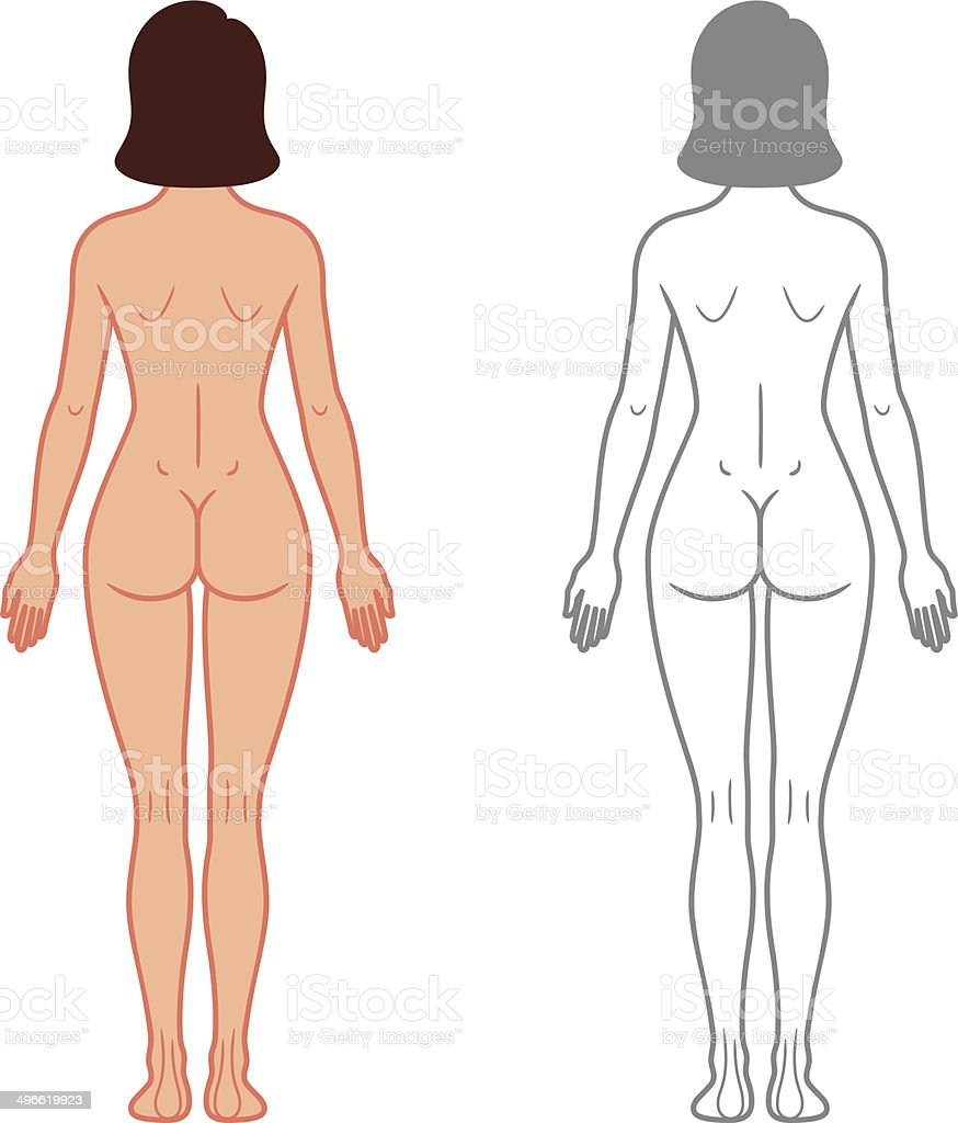 Female Body Back View Stock Vector Art More Images Of Anatomy
