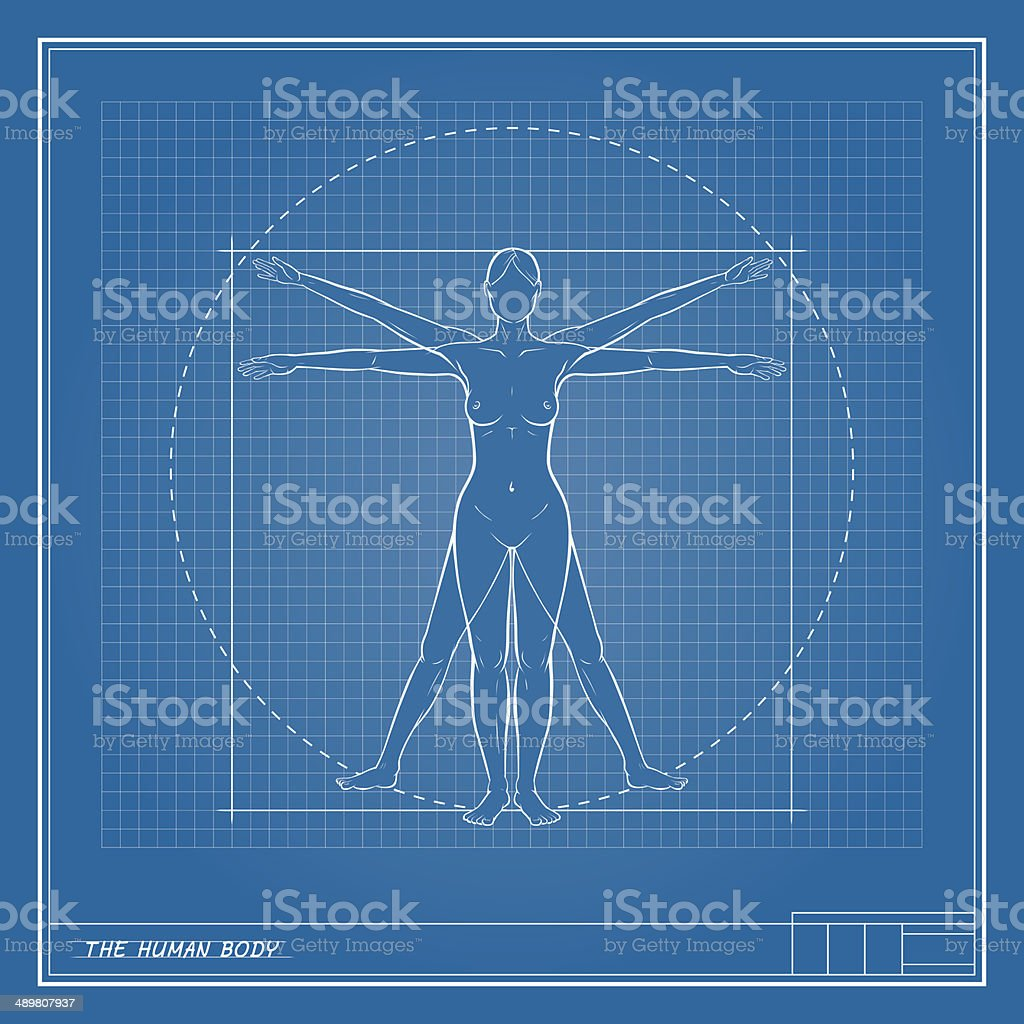 Female Body Blueprint Stock Vector Art More Images Of Anatomy