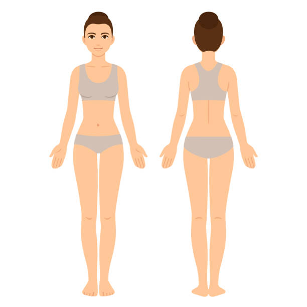 Female body front and back vector art illustration