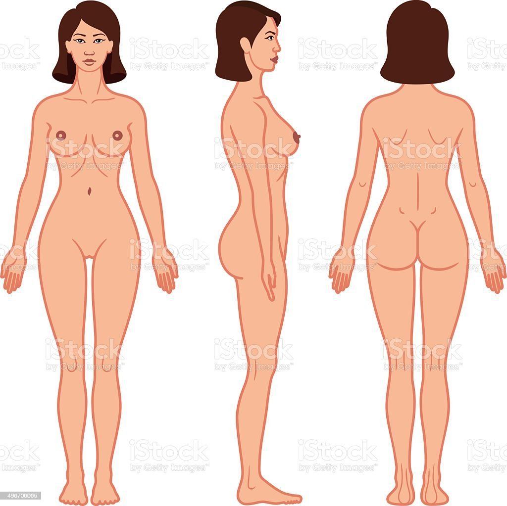 Female Body Front Side And Back View Stock Vector Art More Images