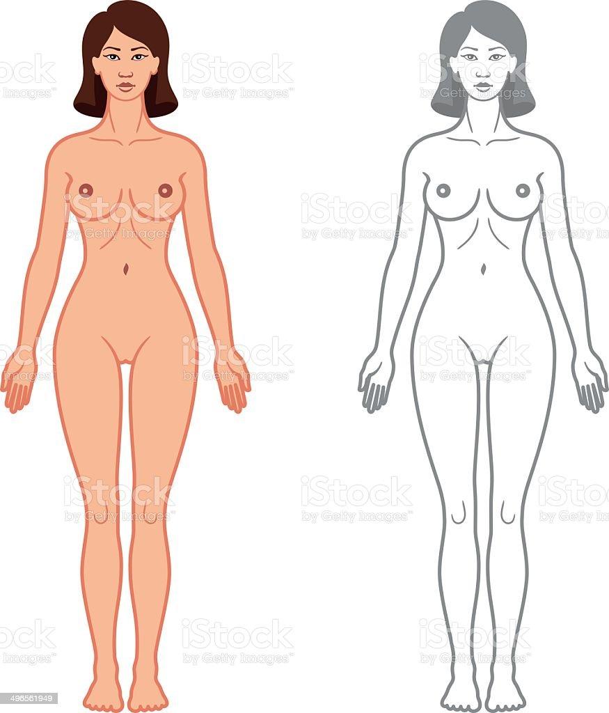 a3d88ac2da70b4 Kobieta ciało widok z przodu kobieta ciało widok z przodu - stockowe  grafiki wektorowe i więcej
