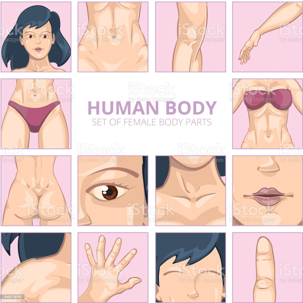 Female Body Parts In Cartoon Style Vector Icons Set Stock Vector Art