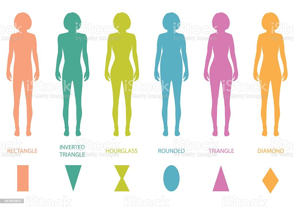 Female Body Types Anatomy Stock Vector Art More Images Of 2015