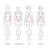 Female body types. Vector illustration.
