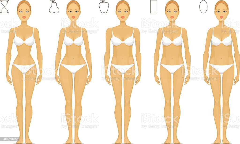 Female Body Types royalty-free female body types stock vector art & more images of adult