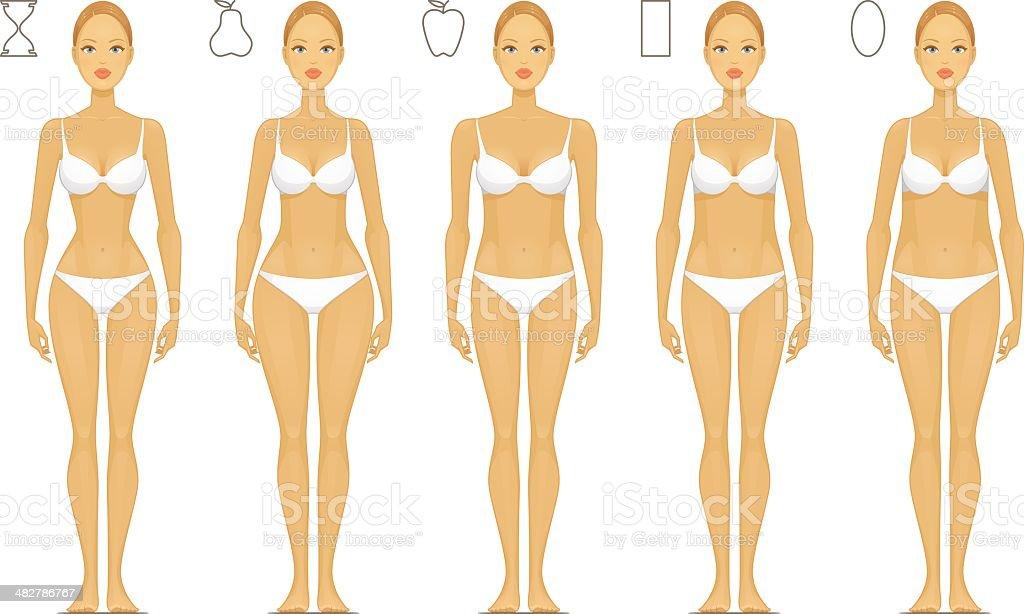 Female Body Types vector art illustration