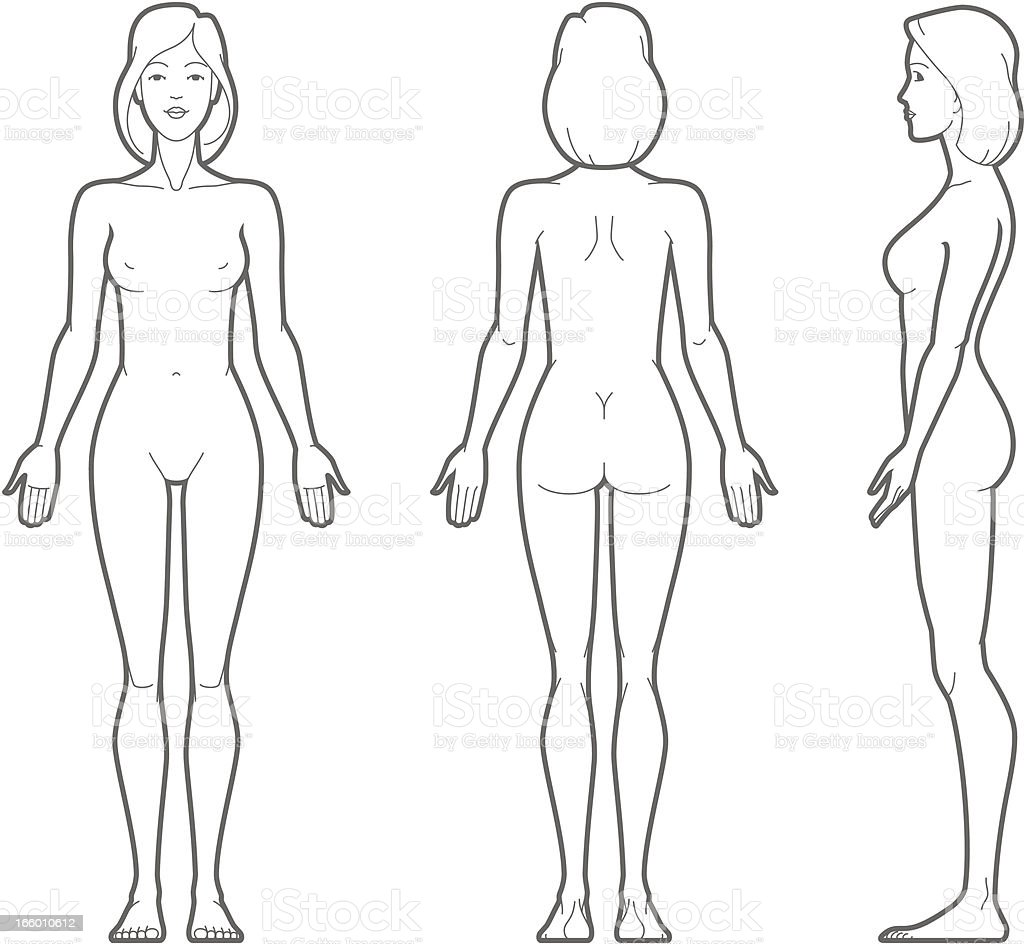 Female body royalty-free female body stock vector art & more images of anatomy