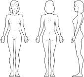 Vector illustration of female body.