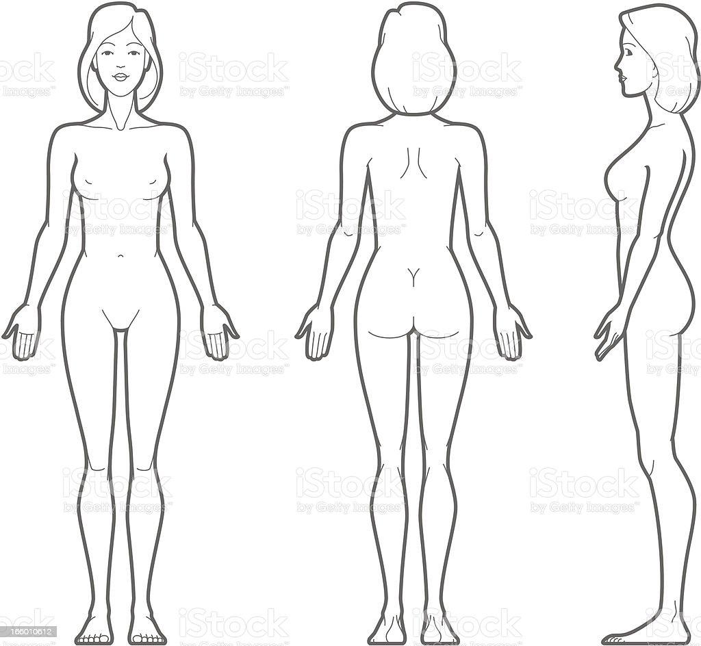 Female body vector art illustration