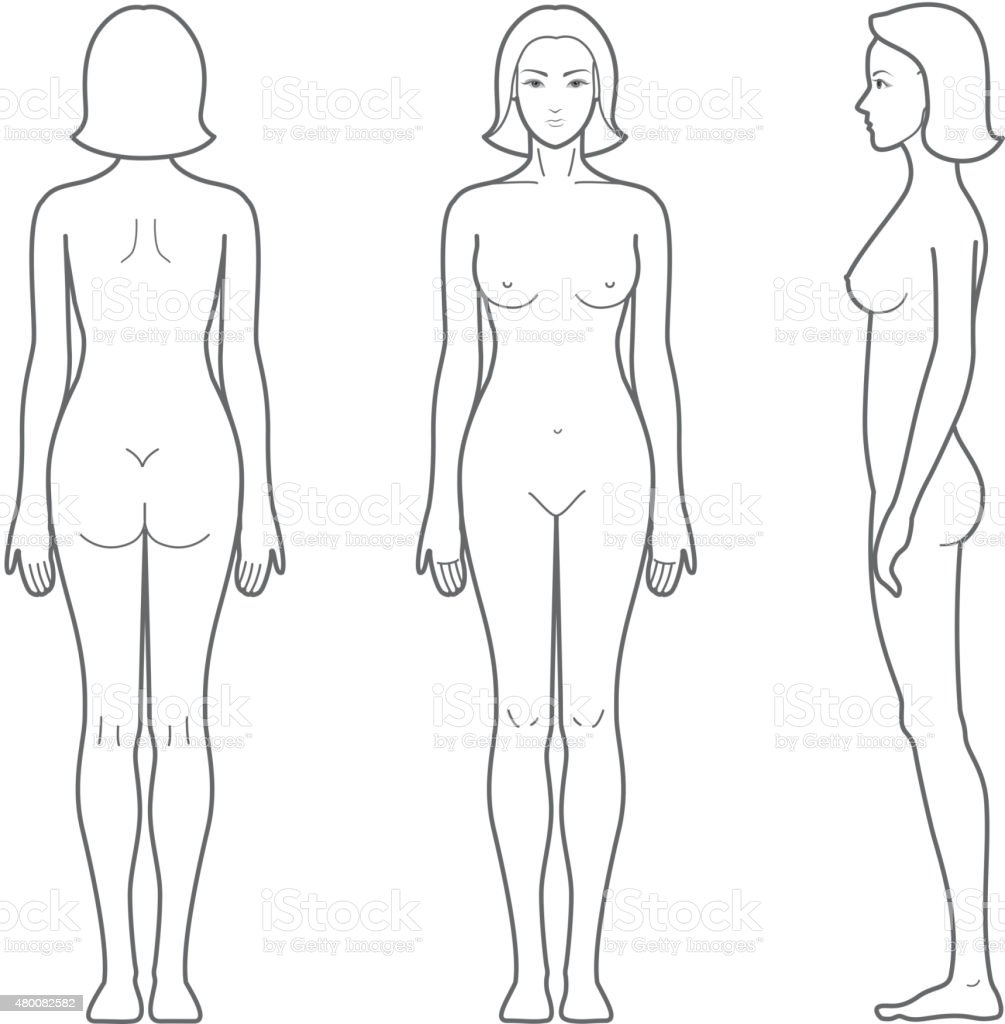 Female Body Stock Vector Art & More Images of Anatomy 480082582 | iStock