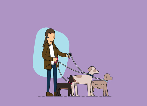 Female dog walker at work. Walking three dogs in the street.