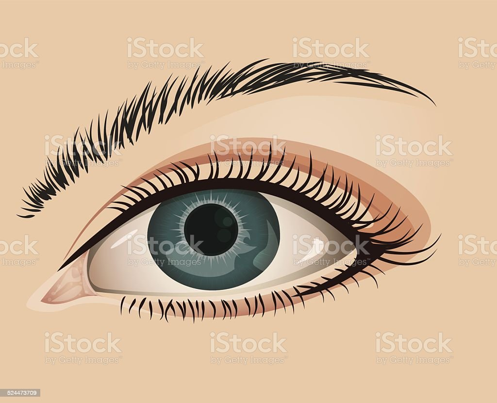 Female eye close-up vector art illustration