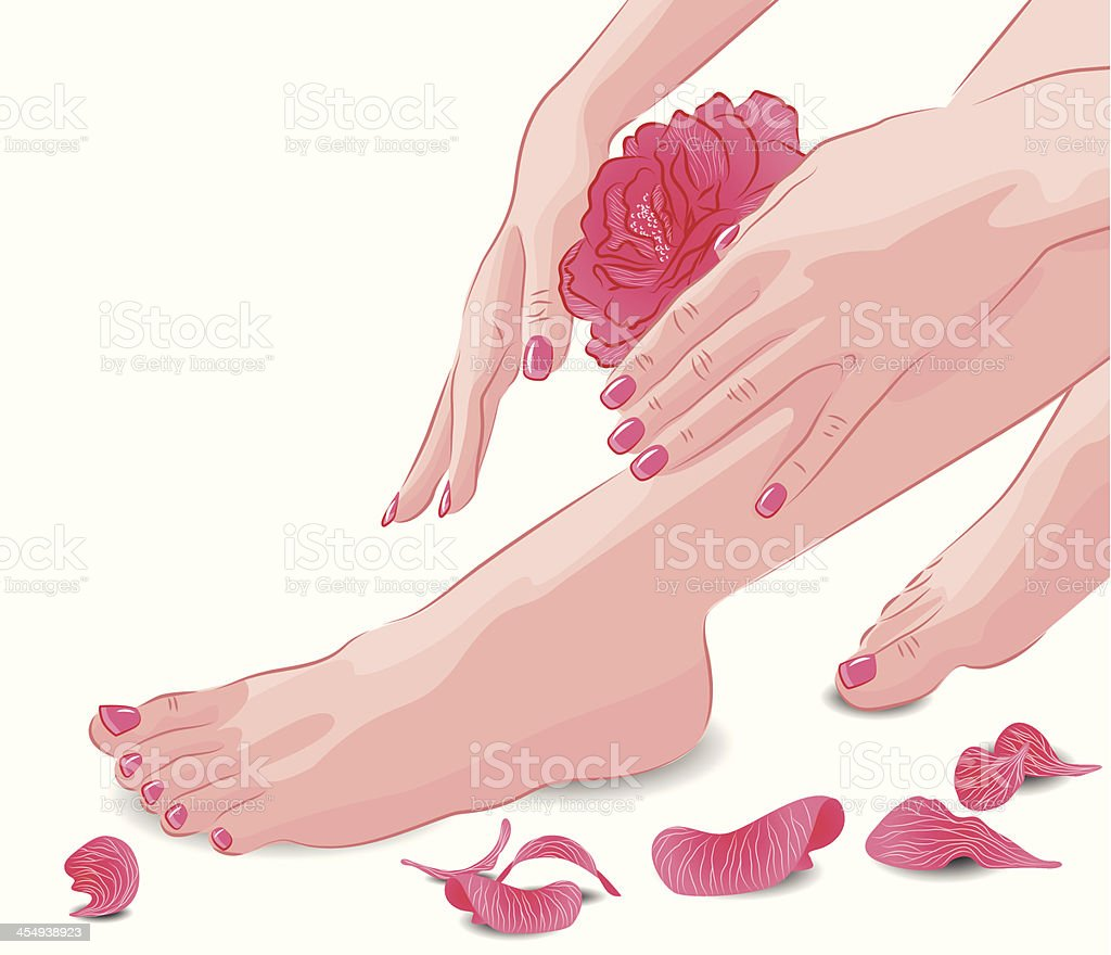 Female feet, hands with pink rose and petals vector art illustration