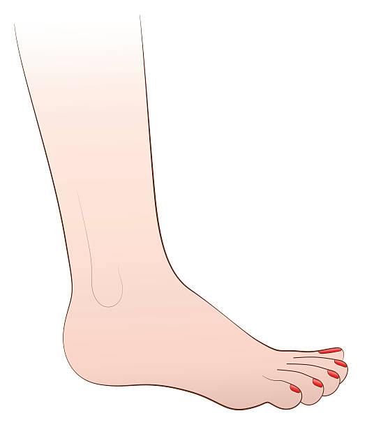Female Foot Nail Polish Vector Art Illustration