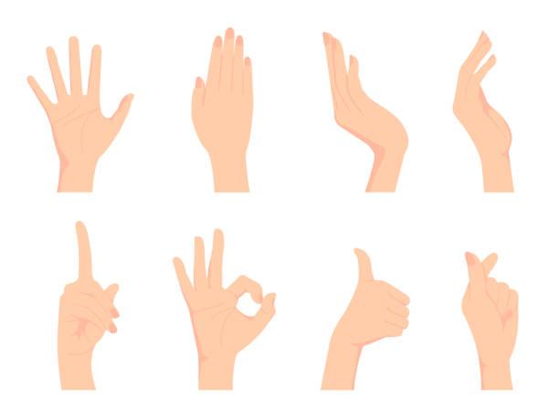 stockillustraties, clipart, cartoons en iconen met vrouwelijke hand gebaar (hand teken) vector illustratie set/ok teken, duim omhoog, vinger hart enz. - menselijke ledematen