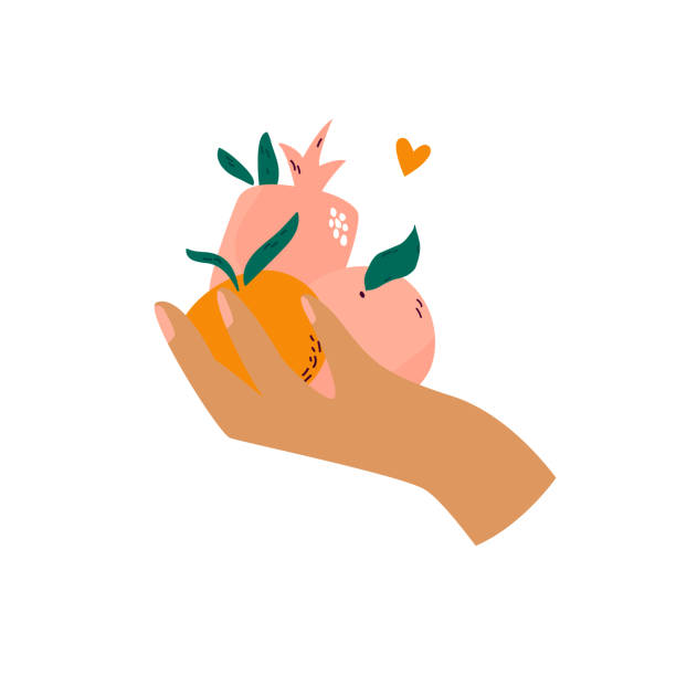 illustrazioni stock, clip art, cartoni animati e icone di tendenza di female hand holding different fruits orange, pomegranate, peach. - mercato frutta donna