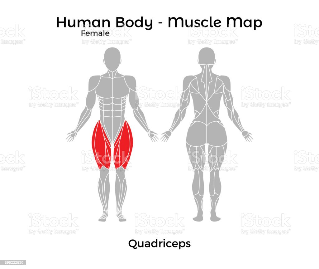 Ilustración de Cuerpo Humano Femenino Mapa De Músculo Cuadriceps y ...