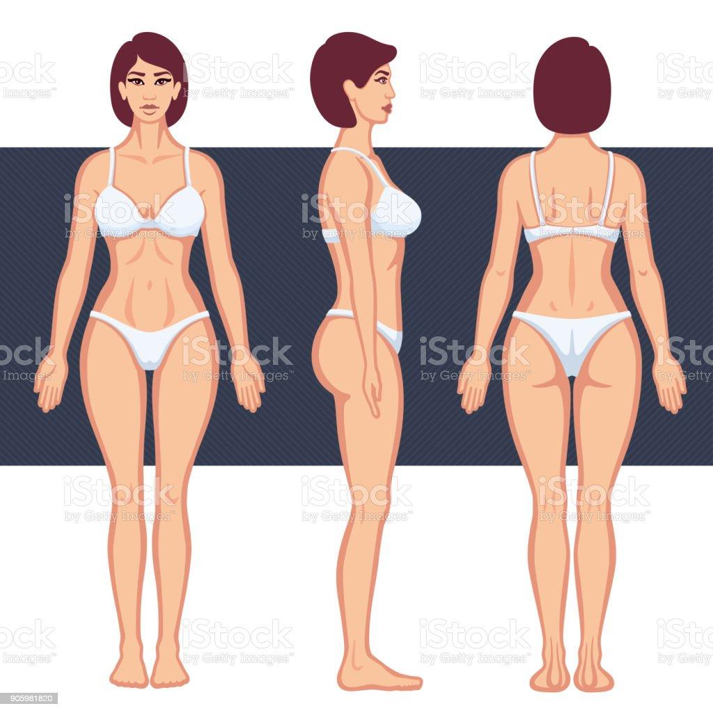 Cuerpo Humano Femenino - Arte vectorial de stock y más imágenes de ...