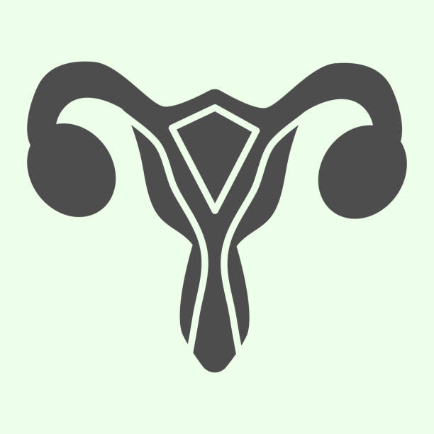 Female reproductive organ solid icon. Woman uterus glyph style pictogram on white background. Human gynecology organs signs for mobile concept and web design. Vector graphics. Female reproductive organ solid icon. Woman uterus glyph style pictogram on white background. Human gynecology organs signs for mobile concept and web design. Vector graphics gynecology stock illustrations