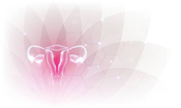 Female reproductive organs artistic design backdrop Female reproductive organs beautiful artistic design, transparent flower at the background. uterus stock illustrations